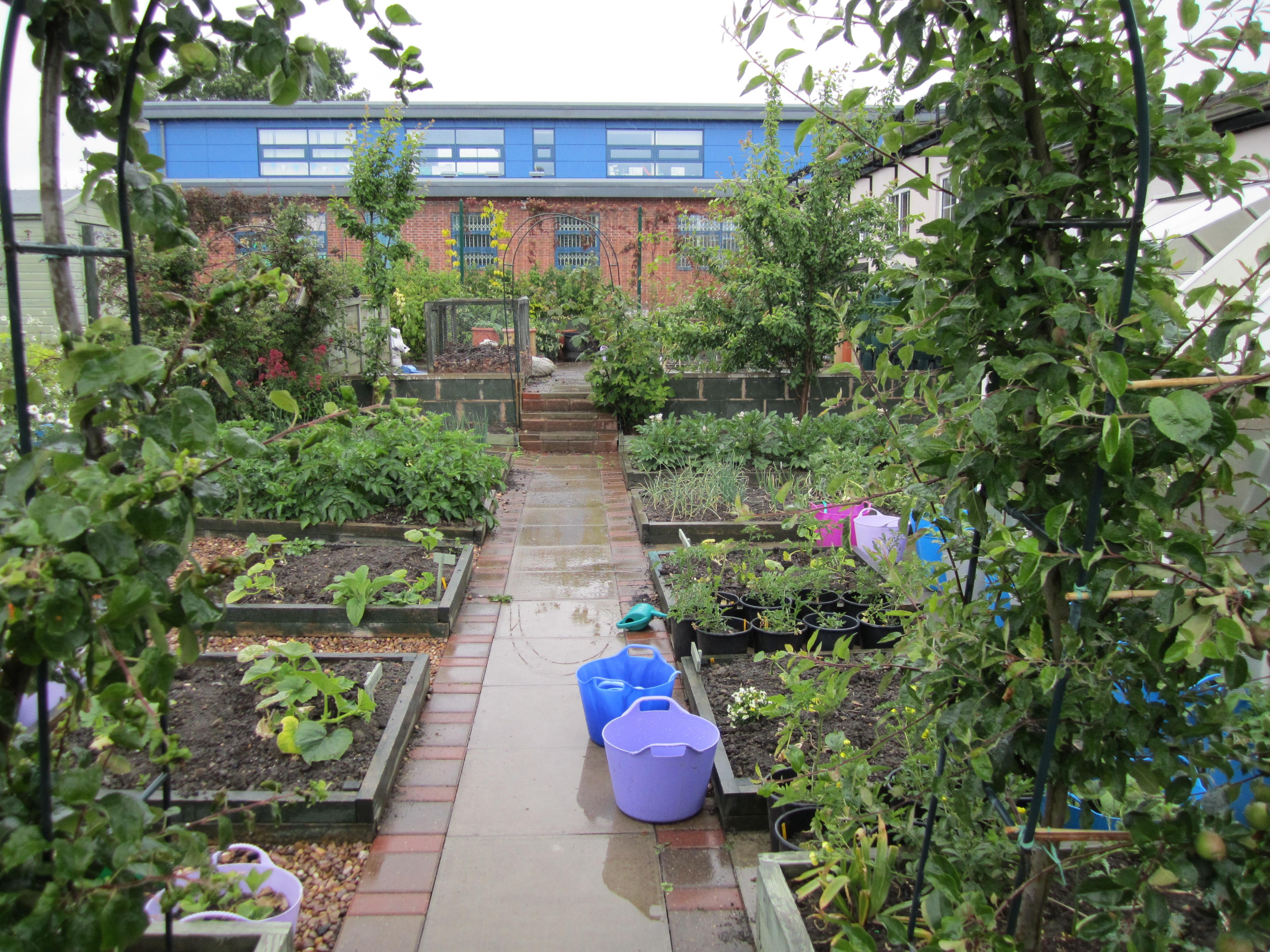 School vegetable gardens -  4320 3240 Pixels Valerie Farrow In Her School Garden