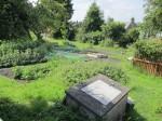 Transition Linlithgow's demonstration garden
