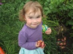 Alice's daughter harvesting potatoes